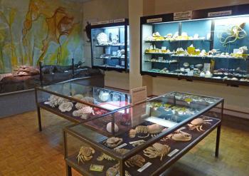Invertebres marins musee d histoire naturelle et d ethnographie de colmar